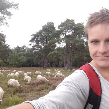 schapen, schapenbegrazing, schaapherder